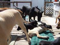 Decky puppies