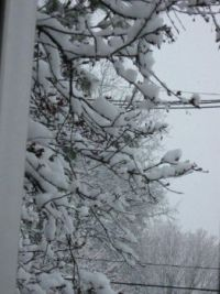 snow kissed branches