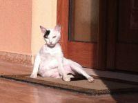 Cat in Parga Town
