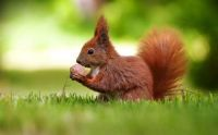 4  ~  'Squirrel having a nice lunch'  (1/2)
