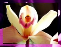 My Orchid . . . . .