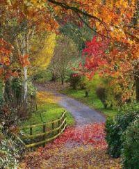 Bodenham Arboretum in Worcestershire, UK  6727