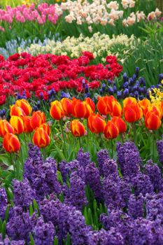 Colorful flowers to brighten your weekend