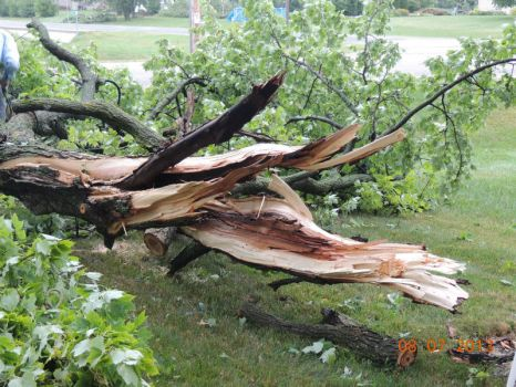 branch from tree taken down by winds August7