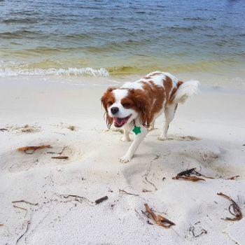 Charlie at Pensacola Florida