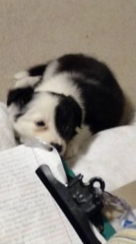 would you believe the dog ate my homework?