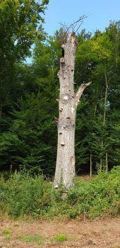 Toter Baum im Lainzer Tiergarten