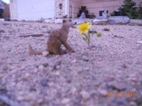 Lonely wildflower & meerkat