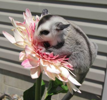 Sometimes,u just got to stop and smell the flowers