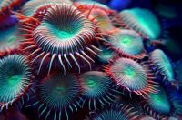 1  ~  'Nature's Coral Art'