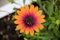 solar #2 sunflower