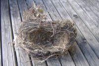 Garden - Birds Nest