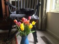Frank and tulips