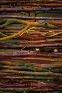 Textures - Twigs