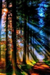 Sunlight through the trees
