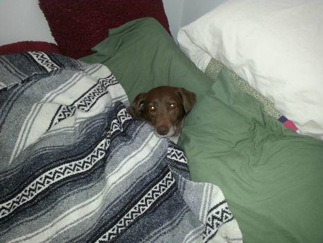 Louis - Night Night