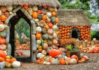 Creative use of Fall Produce in Dallas