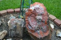 Arizona Petrified Wood 2