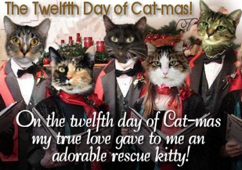 Cat-mas-Caroling-Cats