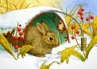 Lovely winter rabbit