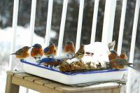 Bluebird group 1:08