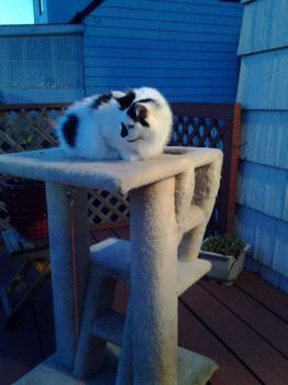 KC (aka Kitty Cat)