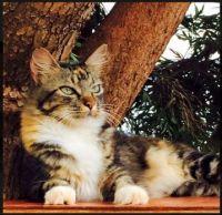 Lanai Island kitty