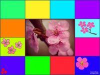 Cherry Blossoms (Apr19P09)