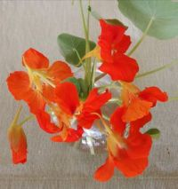 Wonderful, Colourful Nasturtiums