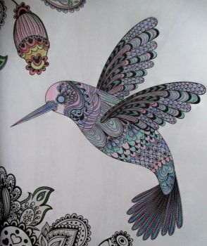Hummingbird - coloring book