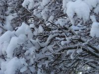 Canada first snow 2