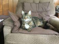 Kit Cat caught a mousie