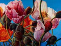 Tulip Fields Forever