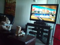 Lion & Bear playing WII Bowling