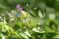spring Bialowieza