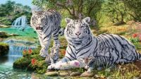 White Tigers & Cubs