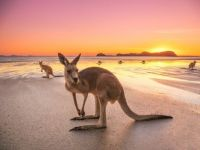Kangaroo beach sunrise