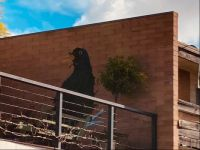 Spotted this crow on a wall