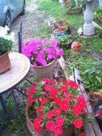 psmith flowers