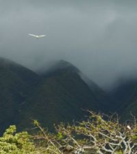 Misty Morning on Molokai