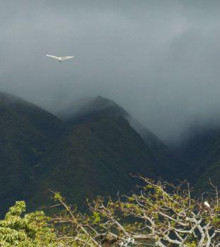 Misty Morning on Molokai