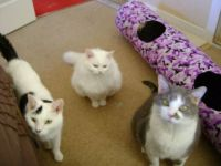 Tyr, Freya & Ash - Did someone say treats??!!