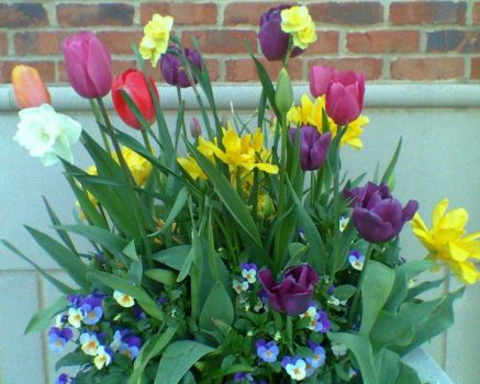 Spring Bulbs~Plan Ahead!
