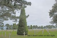In honor of Memorial Day 2021.  A portion of the American Cemetery in Normandy, France,  See below for detail.