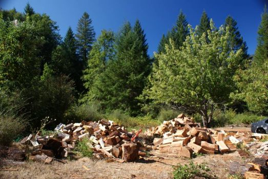 The wood pile ~ this Winter's heat source.