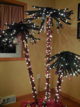 My Christmas Palms!