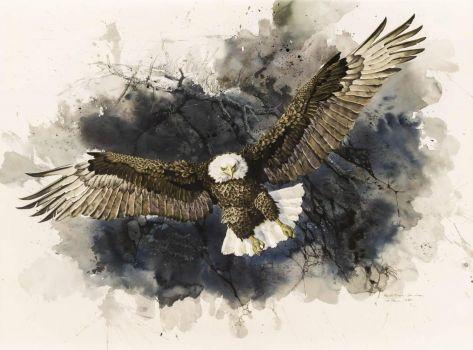 Bald Eagle, San Juan