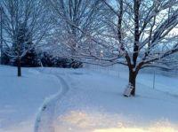 Sister's backyard