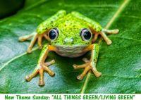 """New Theme Sunday: """"All Things Green""""  (hylomantis lemur  Lemur Leaf Frog)  ENJOY"""