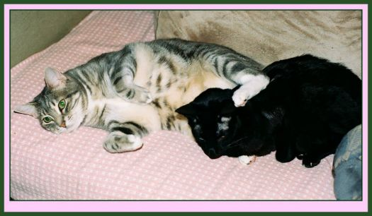In memory of Norton ~ Schnellie always protecting Nortie